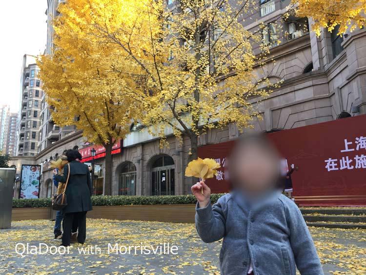 上海の11月の天気と気温服装