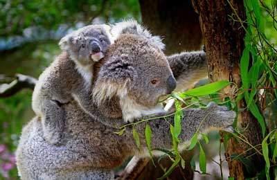 海外の仕事・野生動物保護