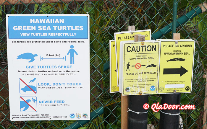 パラダイス・コーヴ・ビーチのウミガメ注意看板