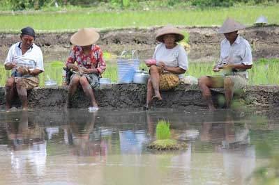 海外仕事現地農業のボランティア