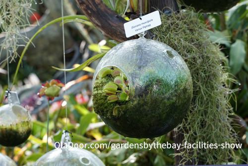 ガーデンズバイザベイの食虫植物
