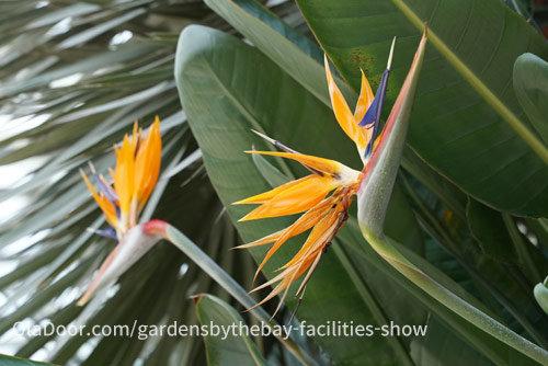 フラワードームの植物