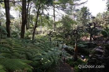 シンガポール植物園のエボリューションガーデン