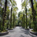 シンガポール植物園・ボタニックガーデンの情報