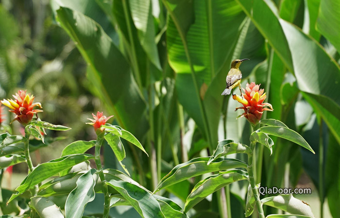 シンガポール植物園の小鳥