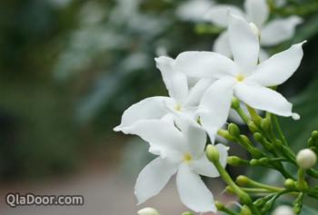 フラグラント・ガーデンの花