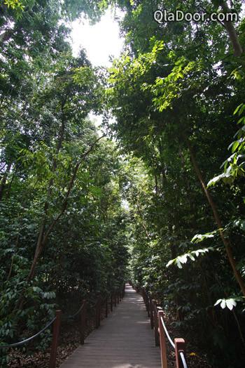 シンガポール植物園のrain forest