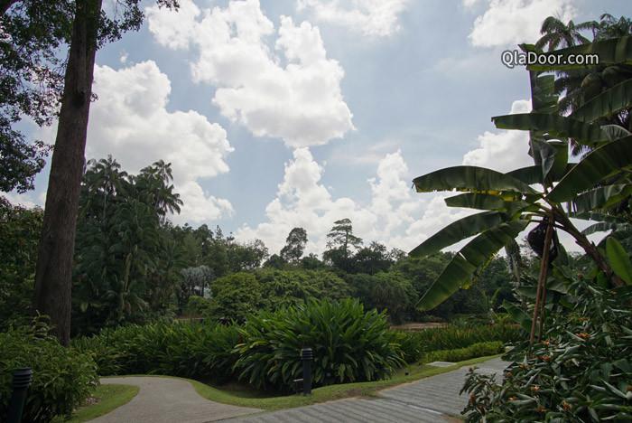 シンガポール植物園の景色