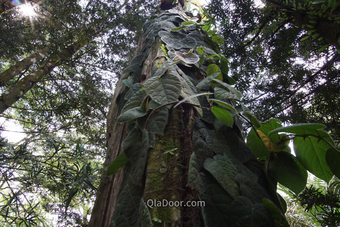 世界遺産のシンガポール植物園