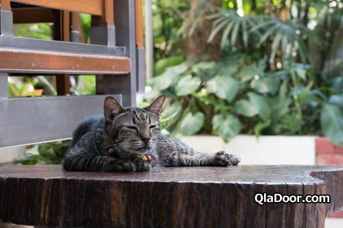 ワットパクナム本堂にいるネコちゃん