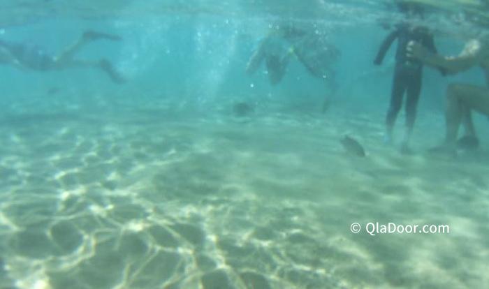 ハナウマ湾の混雑の時の水面下