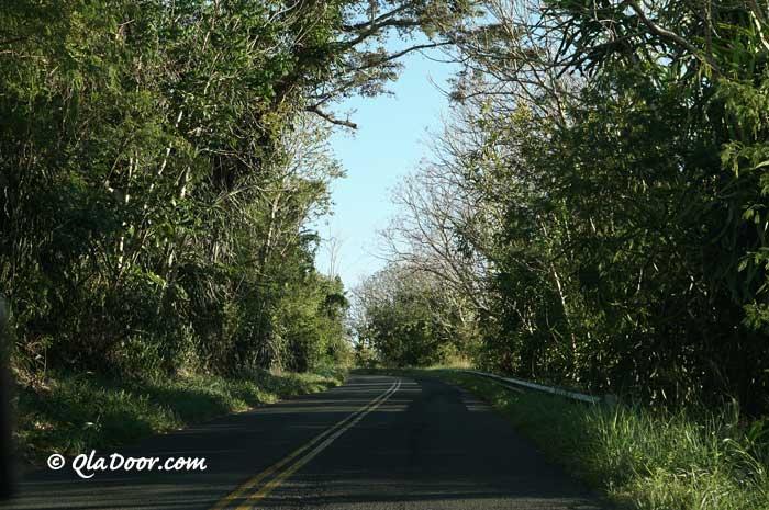ハワイ・タンタラスの丘に行く途中の道