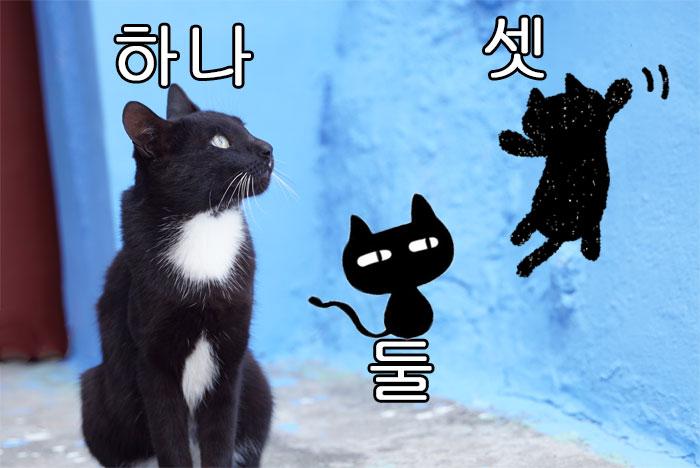 韓国語の漢数詞・動物などの数字の数え方